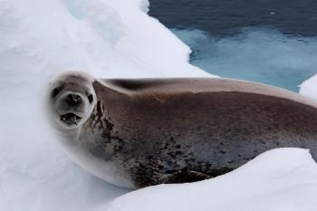 Antarctic and Southern Ocean Coalition Photo