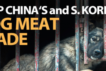 Stop the Dog Meat Trade